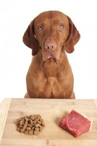 Hund BARF vs. Trockenfutter