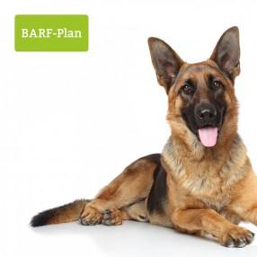 BARF_Plan_kranker_Hund