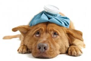 BARF für kranke Hunde
